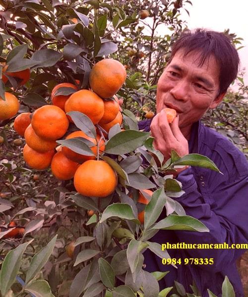Mua cây cam cảnh ở đâu