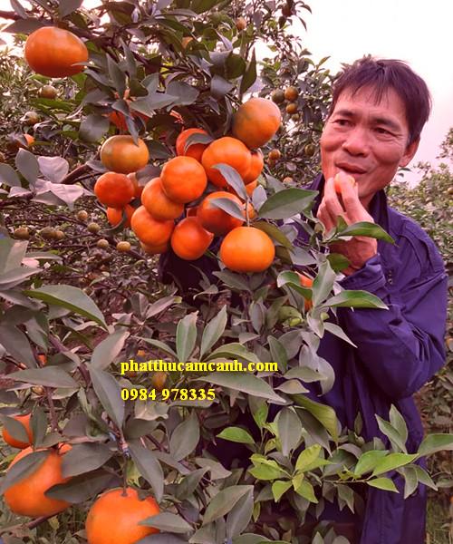 Mua cam sạch tại Hà Nội